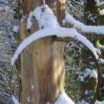 Wheel rim in snow