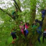 Forest School with North Bute Primary