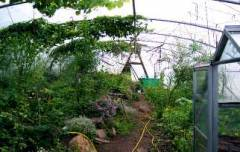 The Polytunnel is a very useful space given the prevailing climate